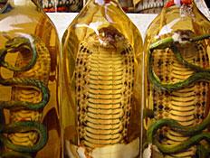 בקבוקים עם נחשים (צילום: simon gurney, GettyImages IL)