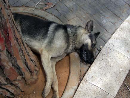 כלב מת ברחוב - תנו לחיות לחיות (צילום: תנו לחיות לחיות)