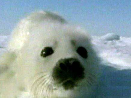 כלב ים (צילום: חדשות 2)