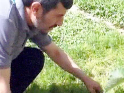 אחמדיניגאד מגדל פטרוזיליה (צילום: חדשות 2)