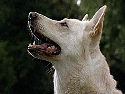 חשד: קשר כלב למכוניתו וגרר אותו. ארכיון (צילום: חדשות 2)