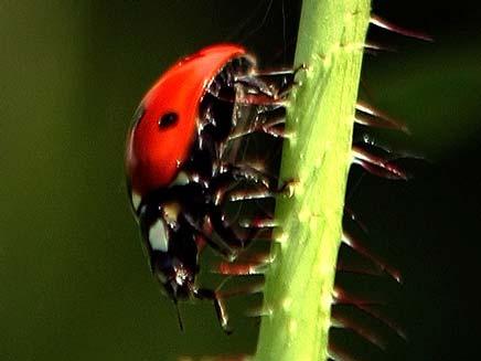 חיפושיות משה רבנו (צילום: רויטרס)