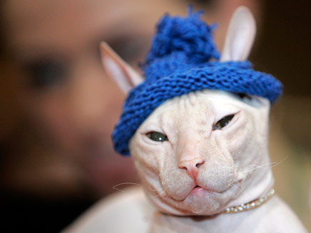 חתול לפני בן אדם (צילום: רויטרס)