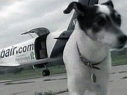 כלבים טסים (צילום: חדשות 2)