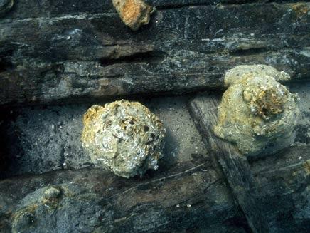 שני כדורי תותח שנמצאו בטרופה (צילום: אוניברסיטת חיפה)