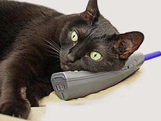 חתול שחור מדבר בטלפון