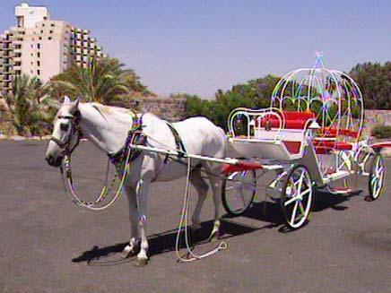 סוס עם כרכרה (צילום: חדשות 2)