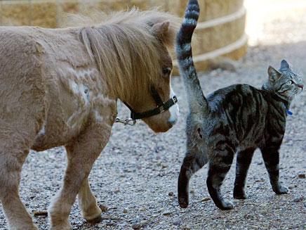 הסוס הקטן בעולם (צילום: דיילי מייל)