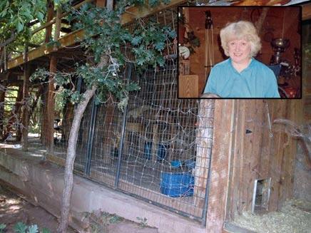 דונה מנסון  שהאכילה דב ונאכלה על ידיו (צילום: ABC)