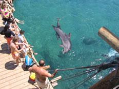 אטרקציות באילת: ריף הדולפינים באילת