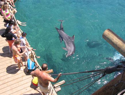 אטרקציות באילת: ריף הדולפינים באילת (צילום: יוליה פריליק-ניב)