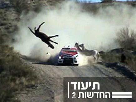 רכב פוגע בסוס בזמן מירוץ (צילום: youtube)