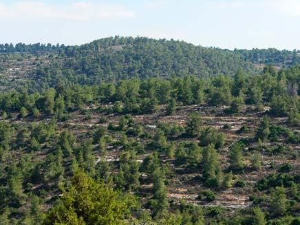 יער בן שמן. ארכיון (צילום: חדשות 2)