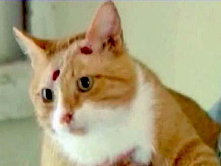 חשד: התעללו בחתולה עד שמתה. ארכיון (צילום: AP)