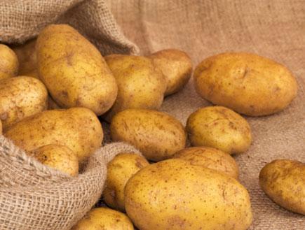 תפוחי אדמה  (צילום: Avalon_Studio, Istock)