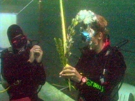 סוכה מתחת למים (צילום: עופר סער)