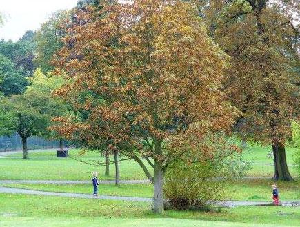 לונדון: פארק גבעת גולדרס (צילום: סתיו שפיר)