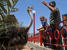 גן החיות בעזה (צילום: AP)