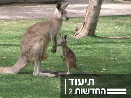 """הגורה ששרדה - הפארק האוסטרלי """"גן גורו"""" (צילום: חדשות 2)"""