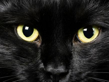 חתול שחור - עין הרע (צילום: diego_cervo, Istock)