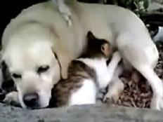 חתול יונק מכלב (צילום: חדשות 2)