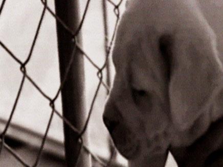 כלבה באלינוי המליטה 21 גורים (צילום: FOX)
