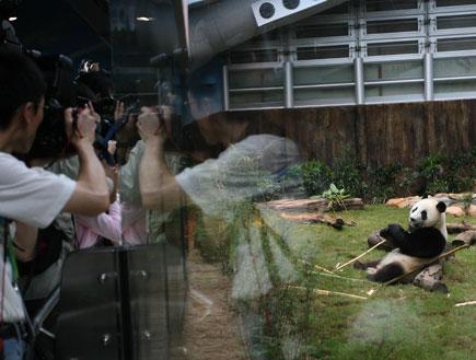 דובי פנדה בפארק אושן, הונג קונג (צילום: Pool, GettyImages IL)