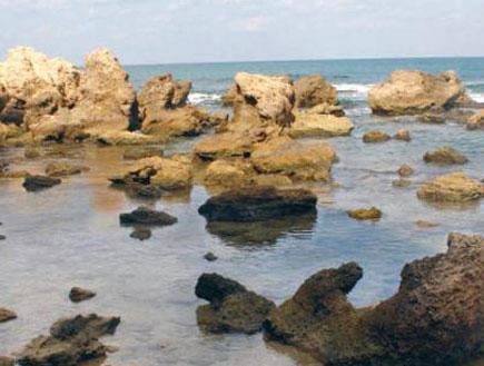 טיולים בשרון: חוף הכורכר באולגה (צילום: אורלי גנוסר, גלובס)