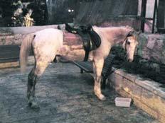 סוס פגע בפעוטה. ארכיון (צילום: חרדים)