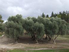 טיול בהרי ירושלים: עמק המעיינות בפארק קנדה (צילום: ערן גל-אור, מסלולים> להתאהב בארץ מחדש)