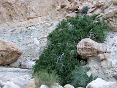 טיול בבקעת ים המלח: נחל סלבדורה