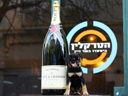 שמפניה (צילום: פדר אוליצקי)