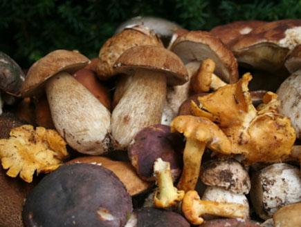 פטריות טריות (צילום: Miha Jesensek, Istock)