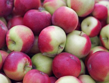 פינק ליידי 3 - תפוחים (צילום: istockphoto)