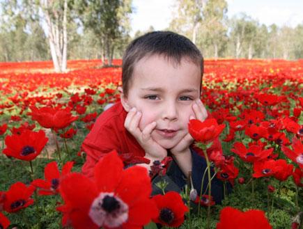 ילד בכלניות (צילום: רפי בביאן)