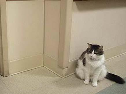 חתול שמנבא את מותם של אנשים (צילום: טלגרף)