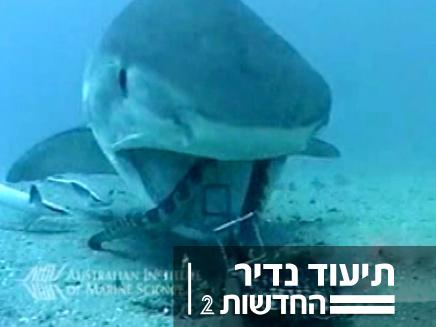 כריש נלחם בנחש