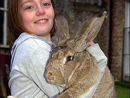 ראלף הארנב הגדול בעולם (צילום: the sun)