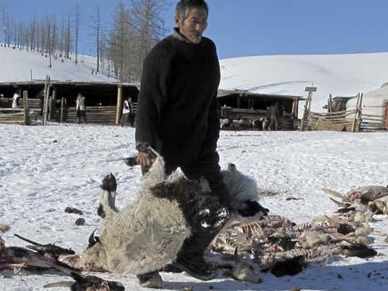 גבר מפנה גופות של חיות שמתו בכפור (צילום: רויטרס)
