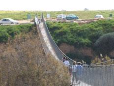 טיולים בנגב: גשר חבלים בשמורת הבשור (צילום: ערן גל-אור)