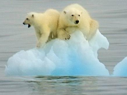 דובי הקוטב - סמל המאבק (צילום: דיילי מייל)