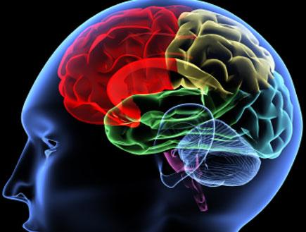 מוח אדם (צילום: Yakobchuk, Istock)