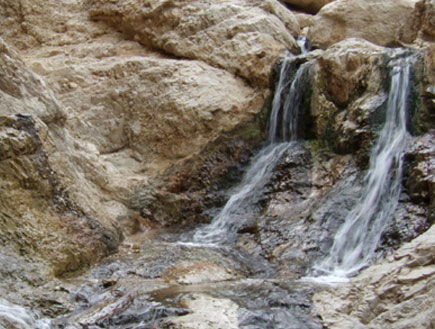טיול במדבר יהודה ובקעת ים המלח: עין בוקק (יח``צ: ערן גל-אור)