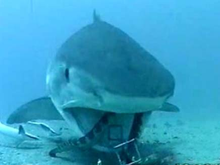 כריש סדרתי? ארכיון (צילום: חדשות 2)