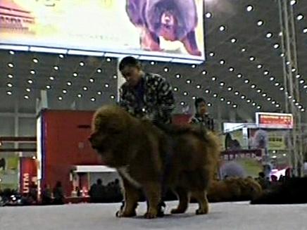 כלבים מיוחדים (צילום: חדשות 2)