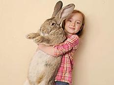 ארנב ענק (צילום: חדשות 2)