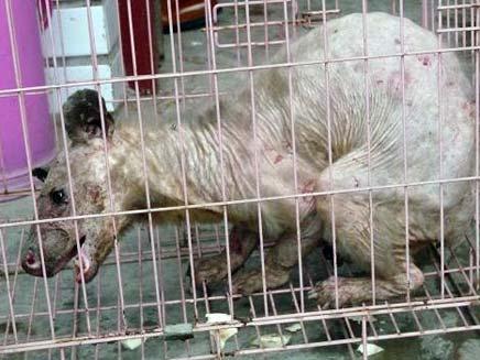 יצור בלתי מזוהה בסין (צילום: Times Online)