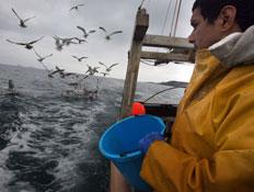 דייג סרטנים (צילום: Matt Cardy, GettyImages IL)