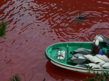 ציד דולפינים (צילום: חדשות 2)