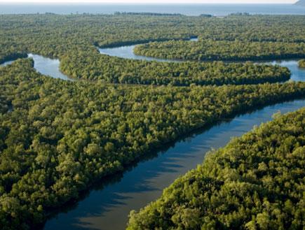 מבט מלמעלה על השמורה - בורנאו (צילום: istockphoto)